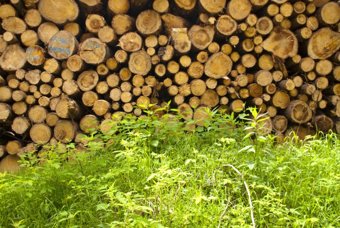 Stack of Wood in Germany